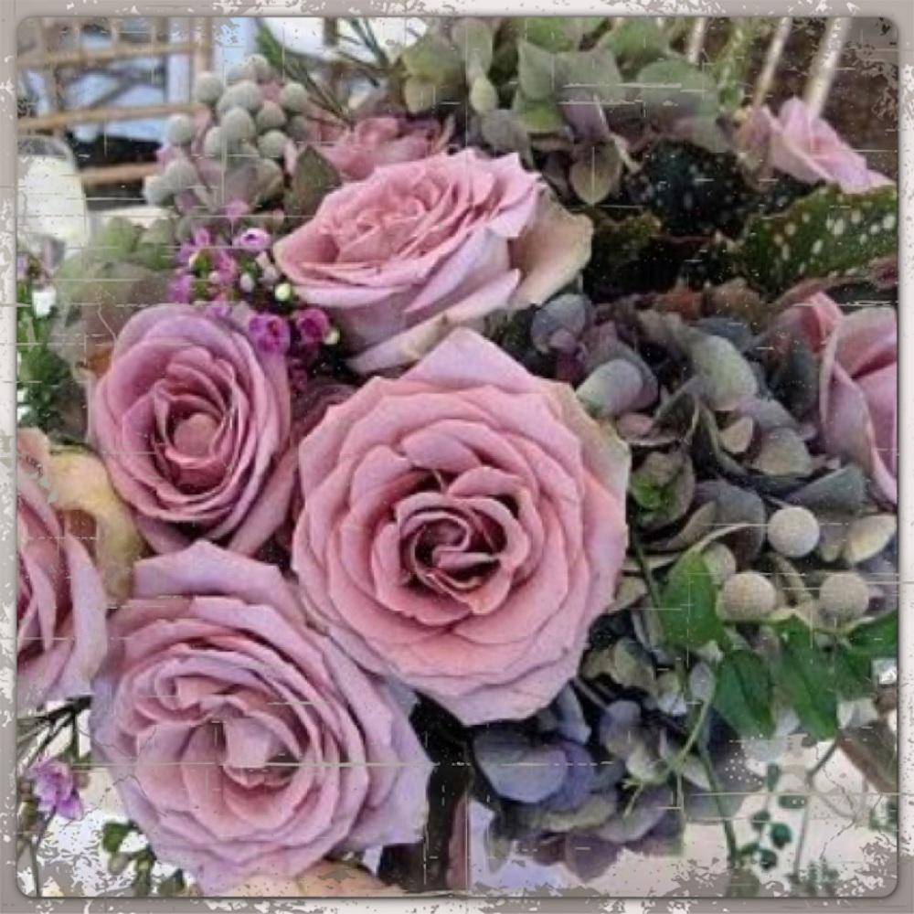 lovely_roses