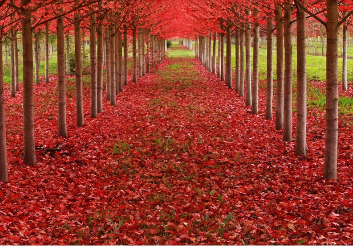 Views and Reviews...Red Roses Carpet..You are welcome